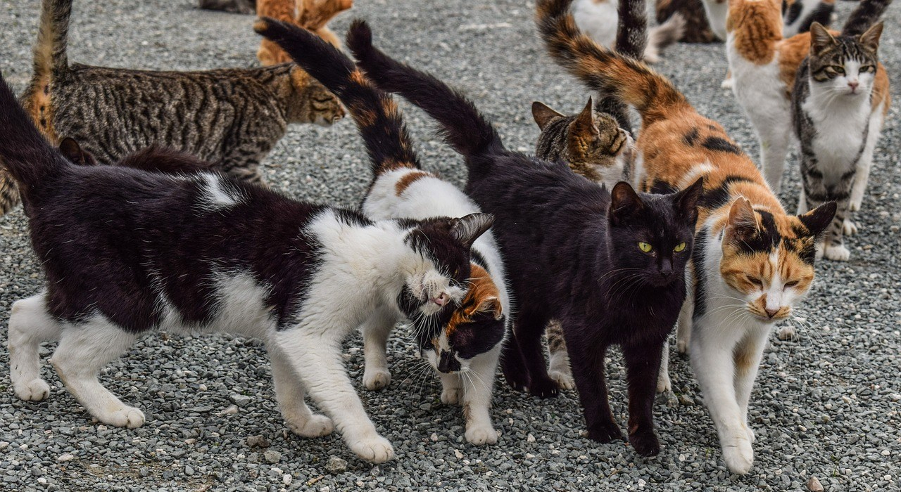 group of community cats